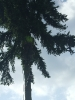 Sonderbaumfällung