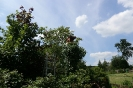 Milan im Baum